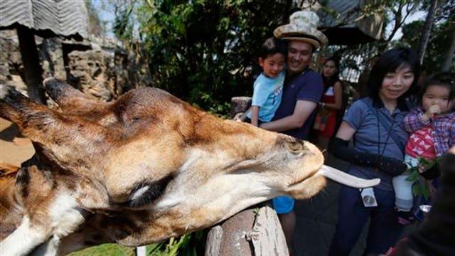 'Blackfish' writer says shut down the zoos