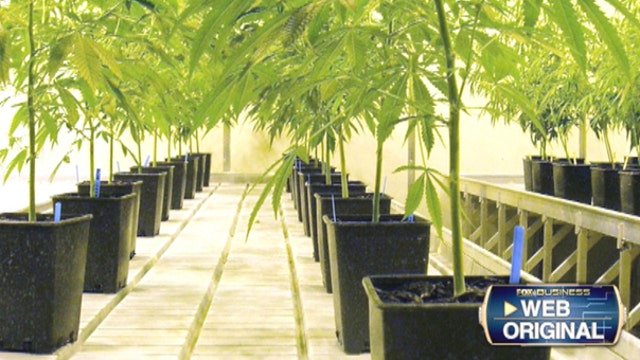 Axim Biotechnologies CEO George Anastassov on the expanding medical uses of marijuana.