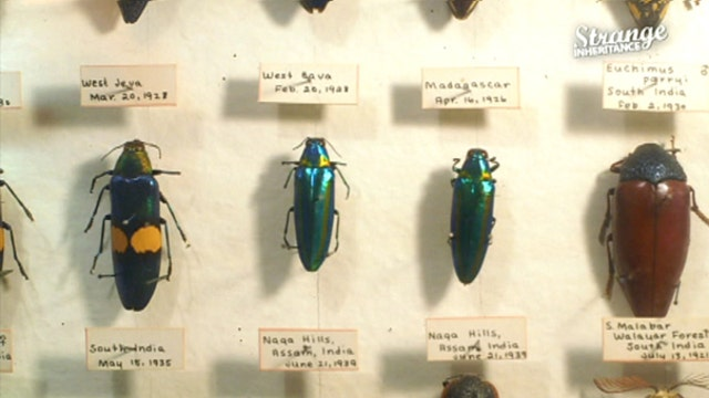 Family inherits a bug collection…worth millions?