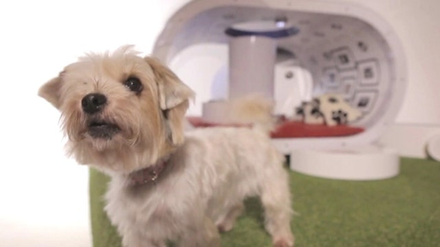 Samsung barking up the wrong tree with $30K doghouse?
