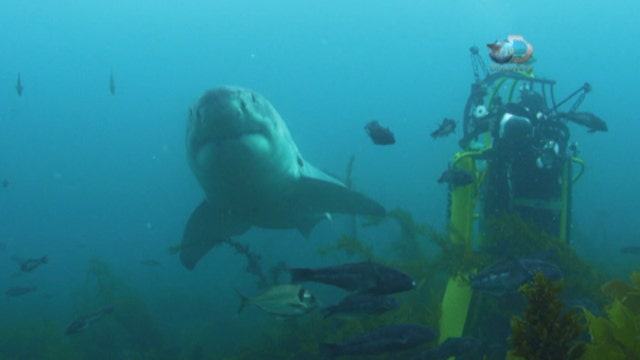Shark Week filmmaker Andy Casagrande on filming sharks and how to keep safe in the water.