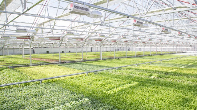 Gotham Greens CEO Viraj Puri talks to FOXBusiness.com's Jade Scipioni about the future of urban farming using hydroponics.