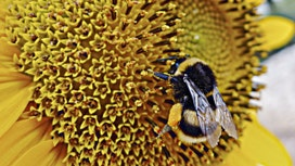 Can bees solve the world's food storage problem?