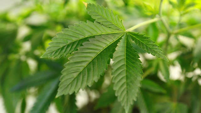 Student caught with marijuana bags not suspended by school