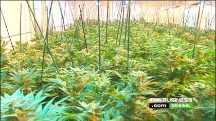 Scotts Miracle-Gro CEO on investing in hydroponics