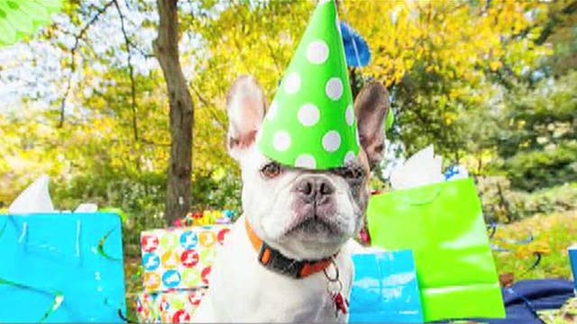 Have a pawty for your puppy's birthday