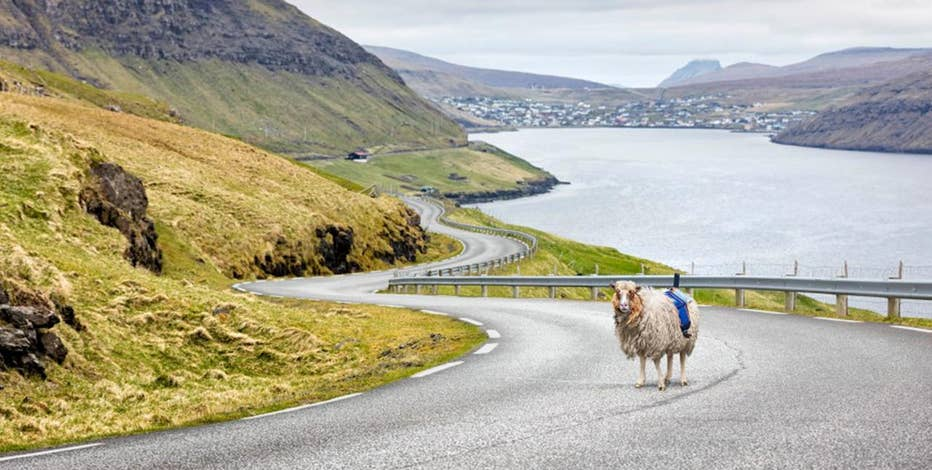 Not many people know about the Faroe Islands, where there more sheep than people. From the perspective of sheep, Sheepview360 hopes to show people what the islands have to offer.