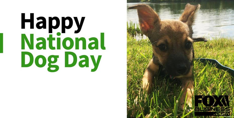 On National Dog Day, we tip our collars to one service industry making serious bones.