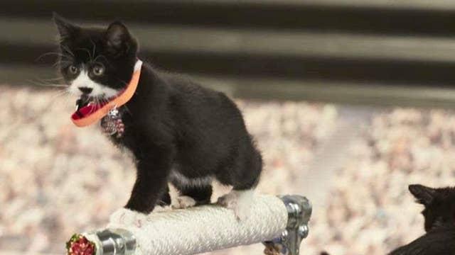 Beth Stern on raising awareness of cat adoptions