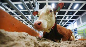 Where's the beef? Cattle tumbles to five-year low