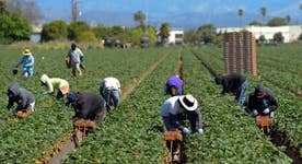 Guest worker program a necessary part of farming?