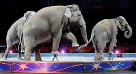 Slumping ticket sales blamed for Ringling Bros. collapse