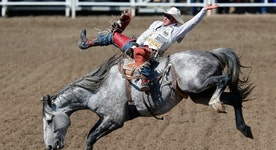 The booming business of bull riding