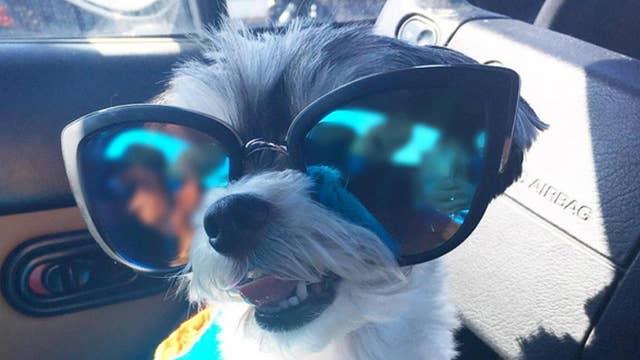 Social media pet sensation @tinkerbellethedog makes some serious bones!