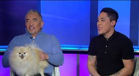 Cesar Millan's tips for dog owners