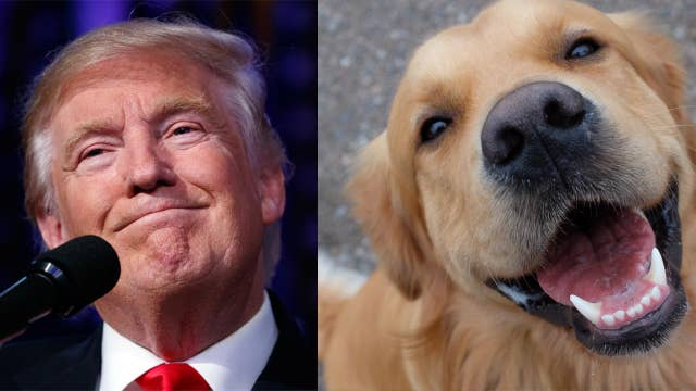 What's the perfect First Dog for President Trump? Cesar Millan responds!