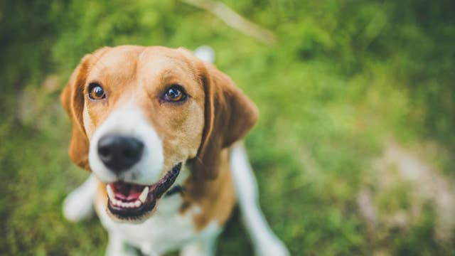Department of Interior becomes dog friendly workplace