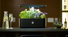 Exclusive: This indoor smart garden is like a 'Nespresso' for gardeners