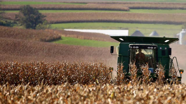 Farmers are battling corn surplus