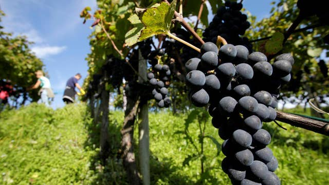 How wildfires impacted Northern California wineries