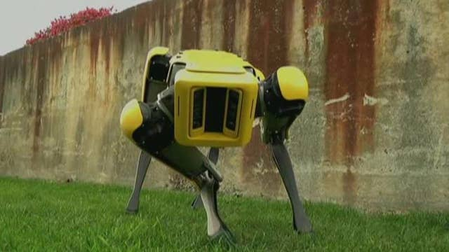 Robots can be used as a weapon of mass destruction: Cybersecurity expert