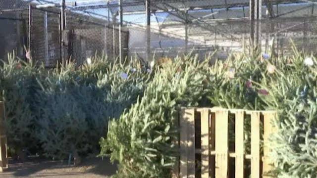 Christmas tree farm gets robbed