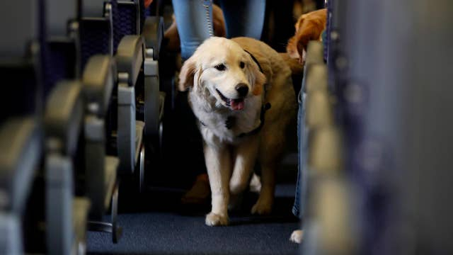 Delta cracking down on owners of service and support animals