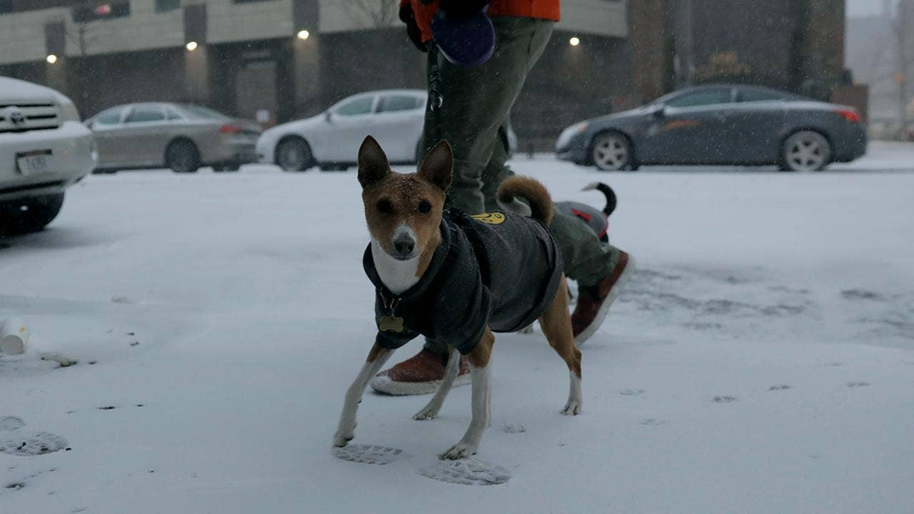 Dog Walking Website Wag