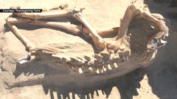Utah family finds remains of ancient horse in backyard during a landscaping project.