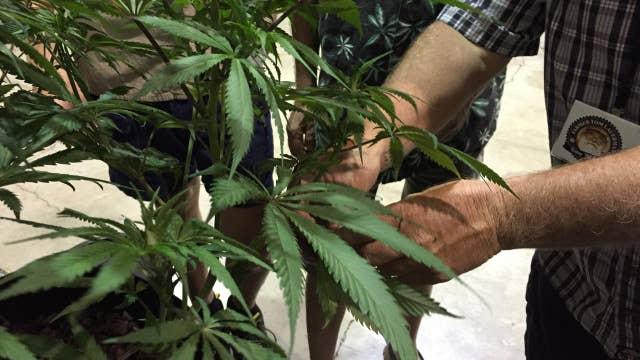 Democratic senators introduce new marijuana bill