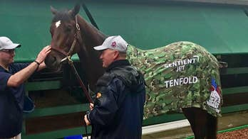 """Sentient Jet sponsors three-year-old horse Tenfold, who will be running for nonprofit organization """"Homes For Our Troops."""""""