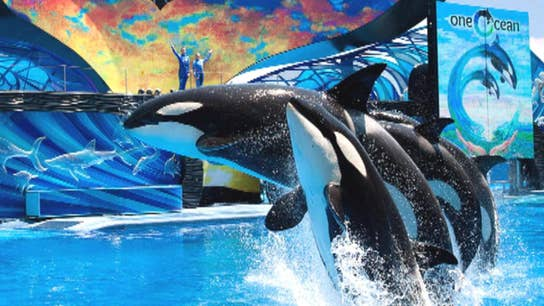 SeaWorld won't face criminal charges in DOJ's 'Blackfish' probe