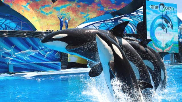 Increased attendance helps SeaWorld beat expectations