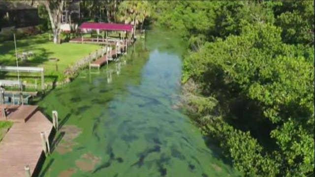 Florida algae hurting business