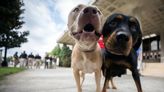 Petco helping your dog, cat eat healthier