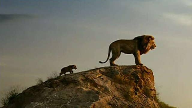 Will the heat wave give a boost to 'The Lion King?'