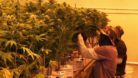 Medical marijuana getting released to registered dispensaries