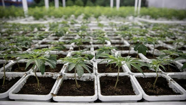 Kennedy: States, not federal government, should worry about legalizing marijuana