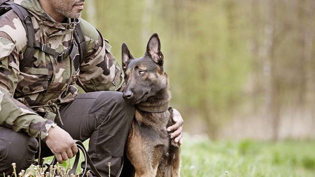 Watch US military dogs in action, protecting freedom