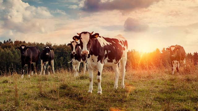 Creamery partners with BMW for cow-powered cars