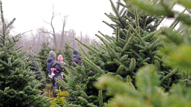 NYC tree vendor selling 20-foot Christmas tree for $6,500
