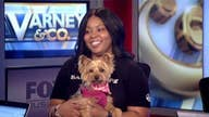 Lavish dog groomer delighted by success