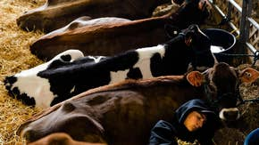 China trade, USMCA create 'opportunity' for dairy farming industry: Dairy Export Council CEO