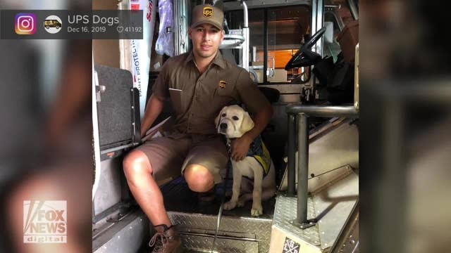Meet the UPS dogs delivering love to drivers