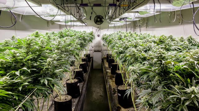 Experts fear high taxes on legal pot will send customers back to black market