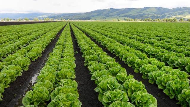 Coronavirus putting pressure on farming industry's labor force