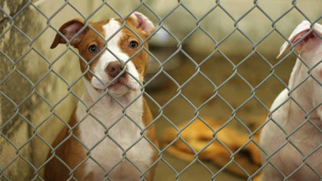 Coronavirus inspires Americans to foster, adopt shelter animals