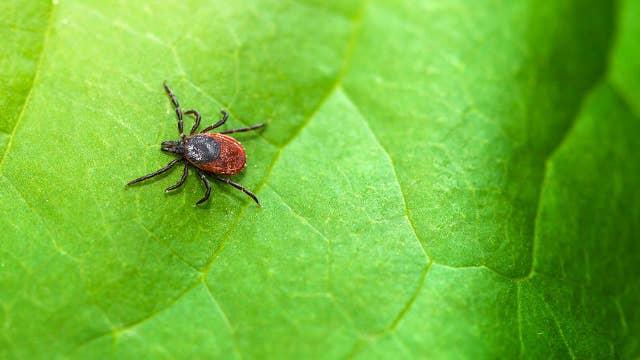 Doctor: How Lyme disease mirrors coronavirus