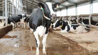Milk demand recovering after coronavirus pandemic lows