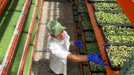 Colorado farmer works to increase food security in his community